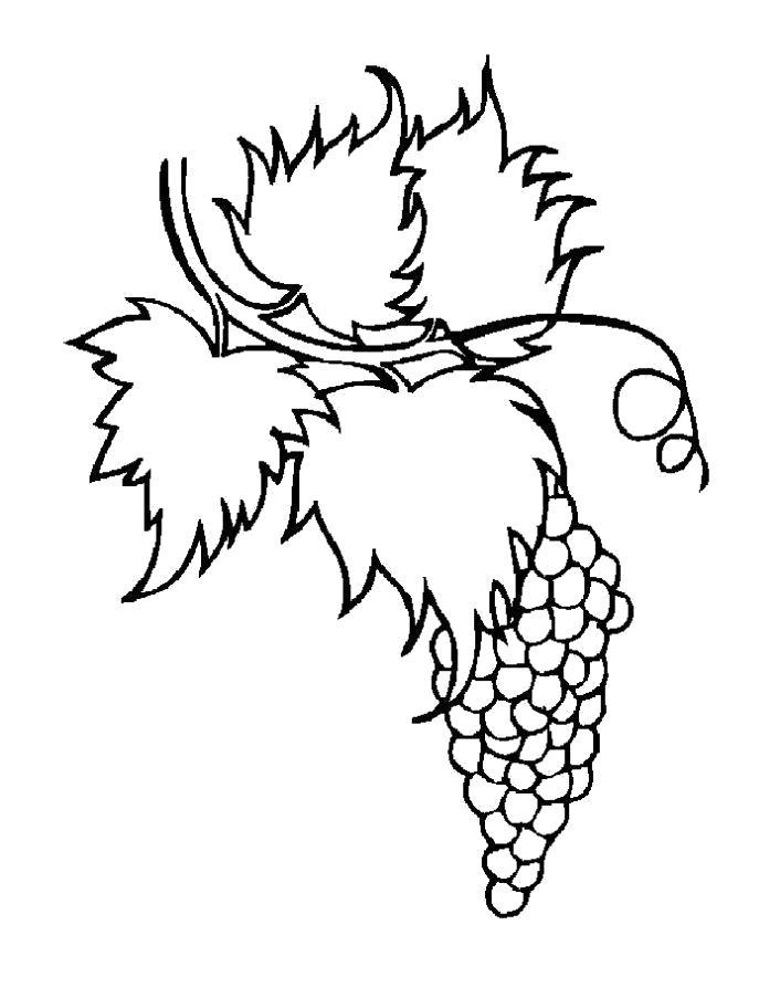 Раскраска Разукрашка виноград . Скачать виноград.  Распечатать ягоды