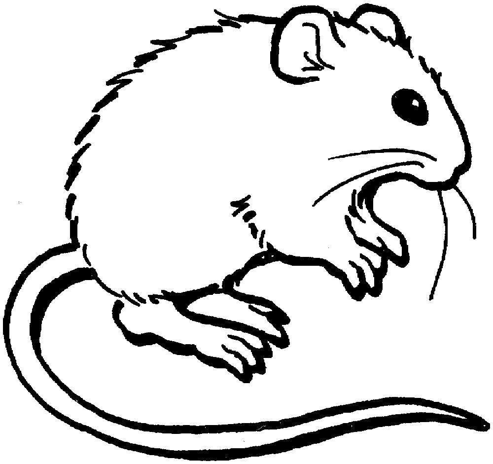 Раскраска Маленькая мышка. Скачать .  Распечатать