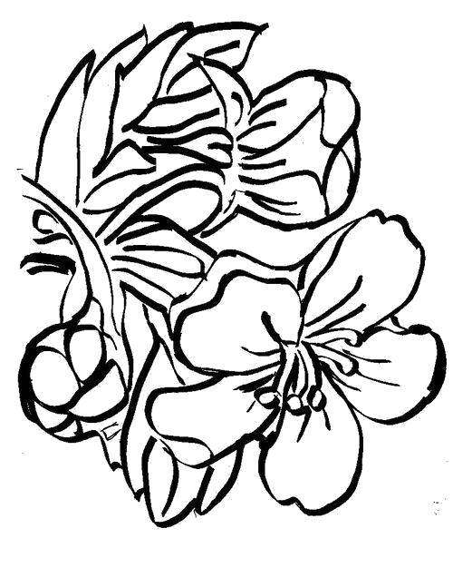 Раскраска  Цветок вишни. Скачать .  Распечатать