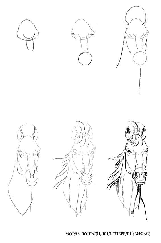 Раскраска Лошадь. Скачать .  Распечатать Учимся рисовать
