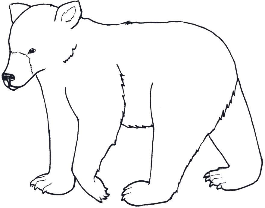 Раскраска Лесной медведь. Скачать Мишка.  Распечатать Мишка
