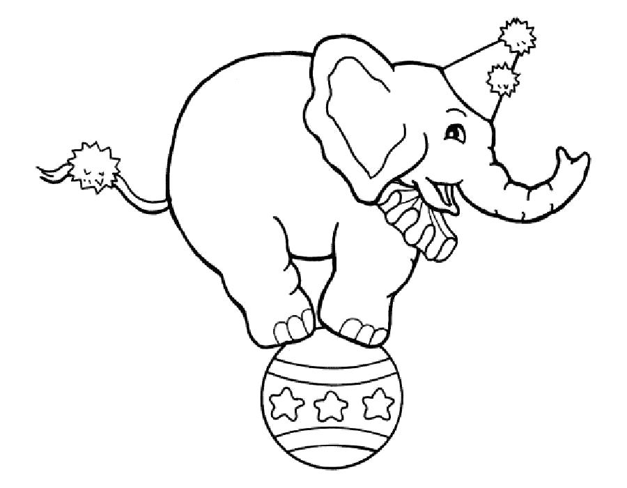 Раскраска  слон на шаре. Скачать слон.  Распечатать слон