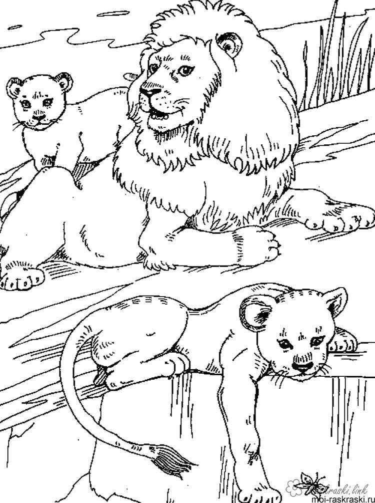 Раскраска  лев лев, львята,  скалы,. природа. Скачать Лев.  Распечатать Дикие животные
