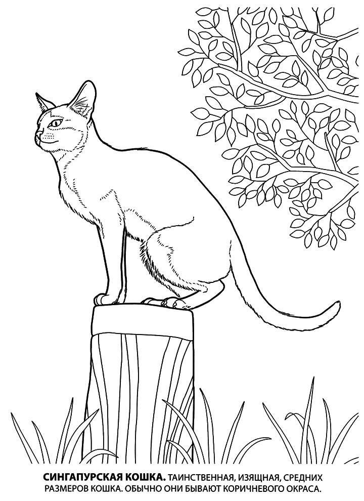 Раскраска Рисунок кошки. Скачать кошка.  Распечатать Домашние животные
