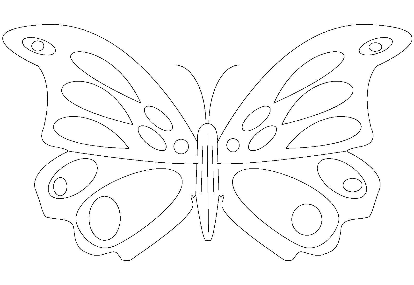 Название: Раскраска Бабочка раскраска. Категория: Бабочки. Теги: Бабочки.