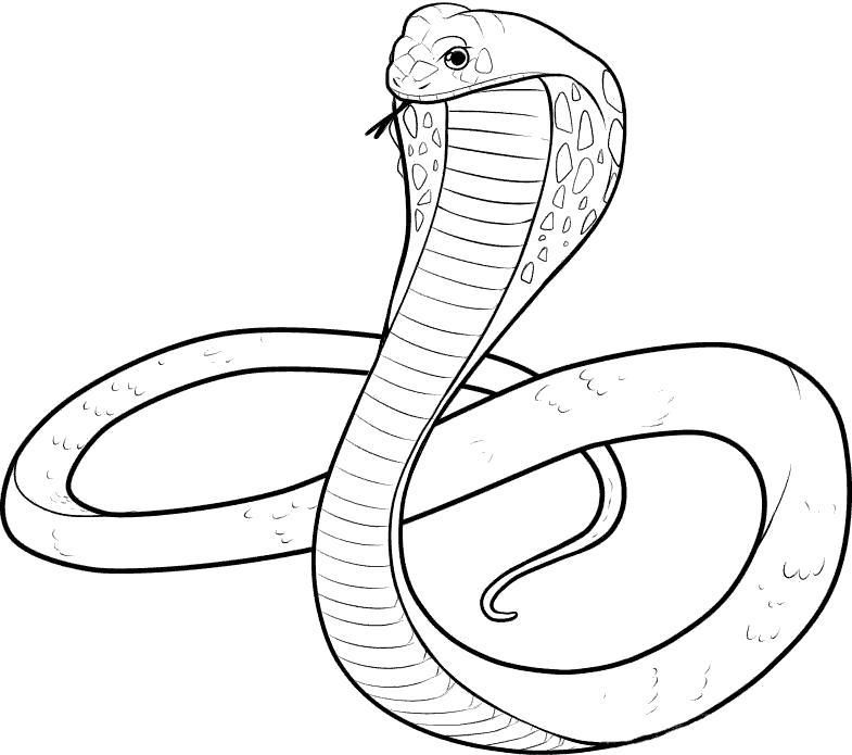 Раскраска красивая кобра. Скачать Кобра.  Распечатать Кобра