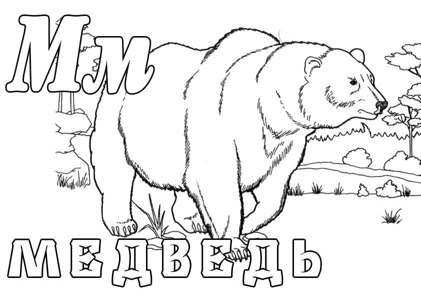 """Раскраска  """"Зоопарк"""", Буква М, Медведь. Скачать буквы.  Распечатать буквы"""