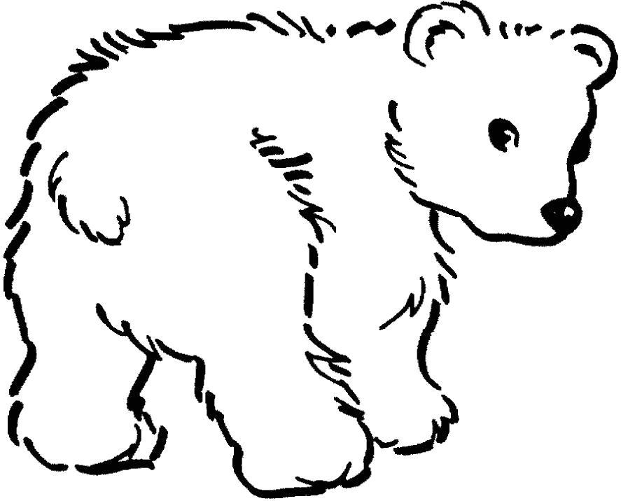 Раскраска Жалобный Медвежонок . Скачать медведь.  Распечатать Дикие животные