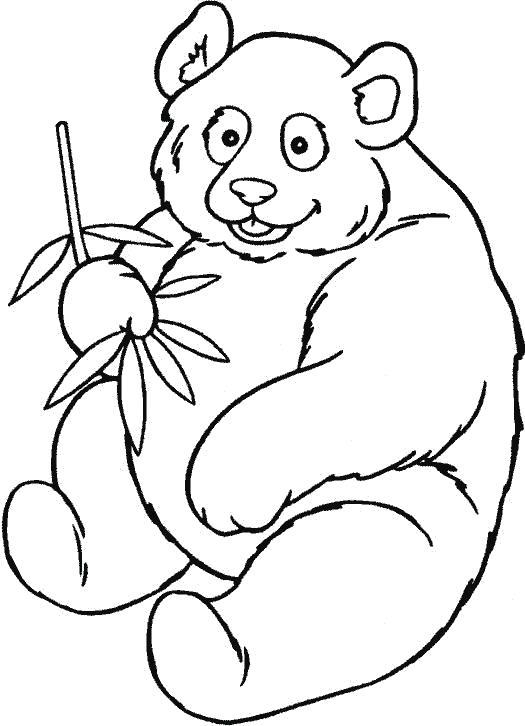 Раскраска панда кушает фрукты. Скачать Панда.  Распечатать Дикие животные