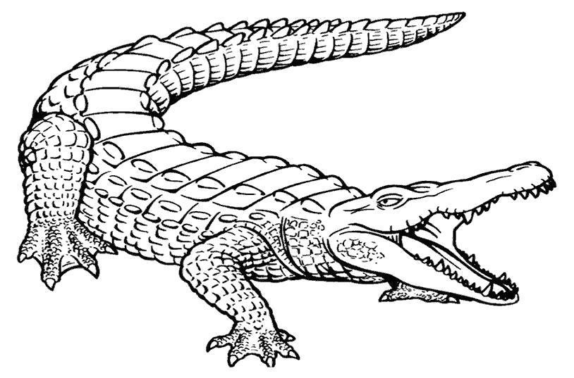 Раскраска Злой крокодил. Скачать .  Распечатать