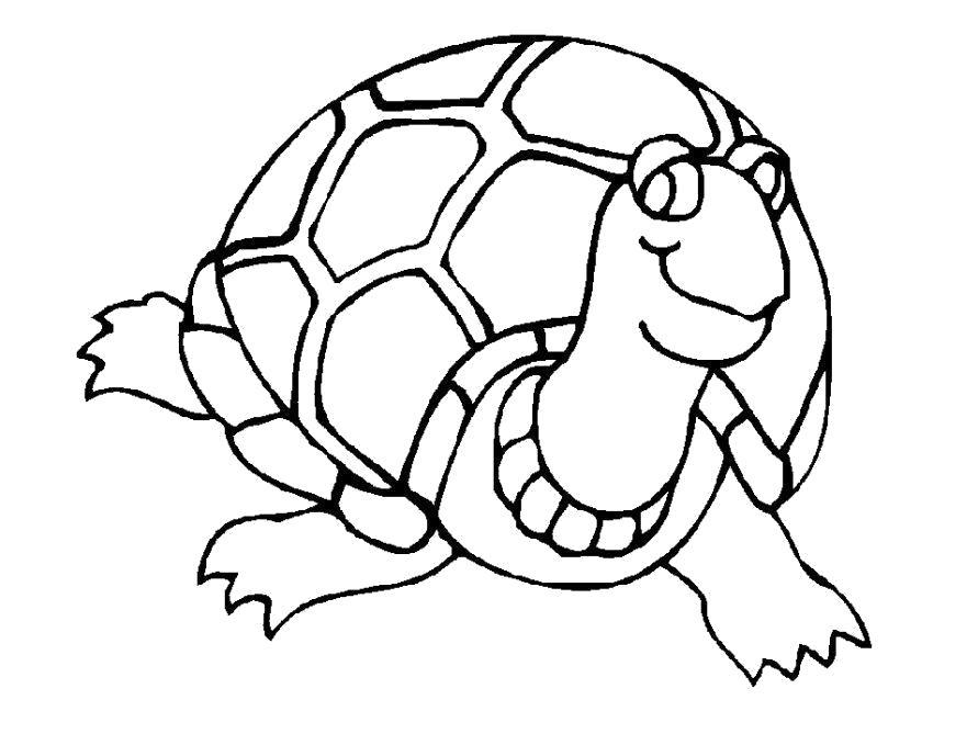 Раскраска  черепаха. Скачать Черепаха.  Распечатать Дикие животные