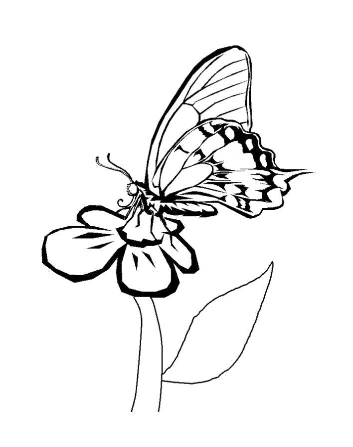Раскраска  бабочка красивая. Скачать Бабочки.  Распечатать Бабочки