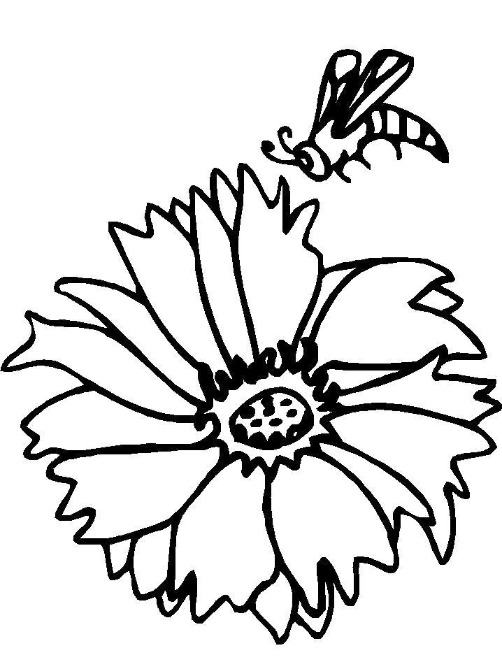 Раскраска Пчела над цветком. Скачать Пчела.  Распечатать Насекомые