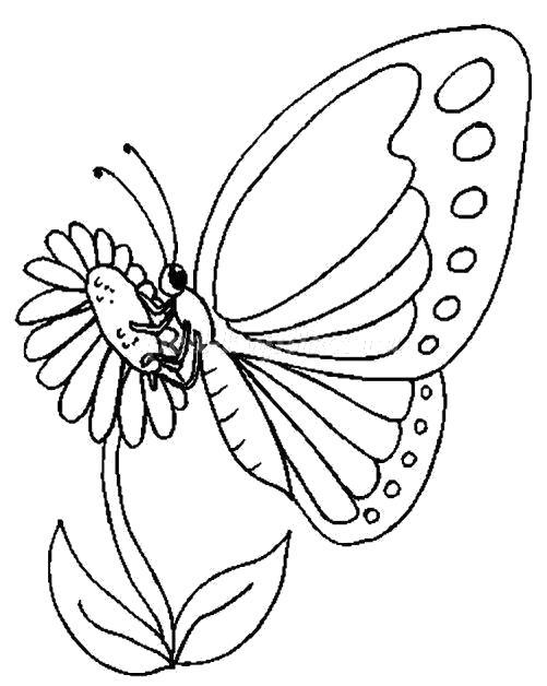 Раскраска Бабочка собирает нектар. Скачать .  Распечатать