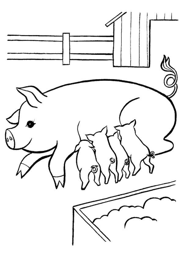 Раскраска В деревне у бабушки. . Свинья с поросятами. Скачать Свинья.  Распечатать Домашние животные