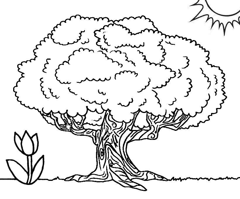 Раскраска Самое большое дерево баобаб . Скачать дерево.  Распечатать Контуры дервеьев