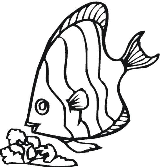 Раскраска Рыба - ангел. Скачать рыба.  Распечатать рыба