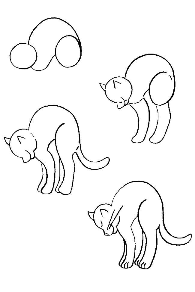 Раскраска Как нарисовать котенка поэтапно, фото . Скачать как нарисовать.  Распечатать Учимся рисовать