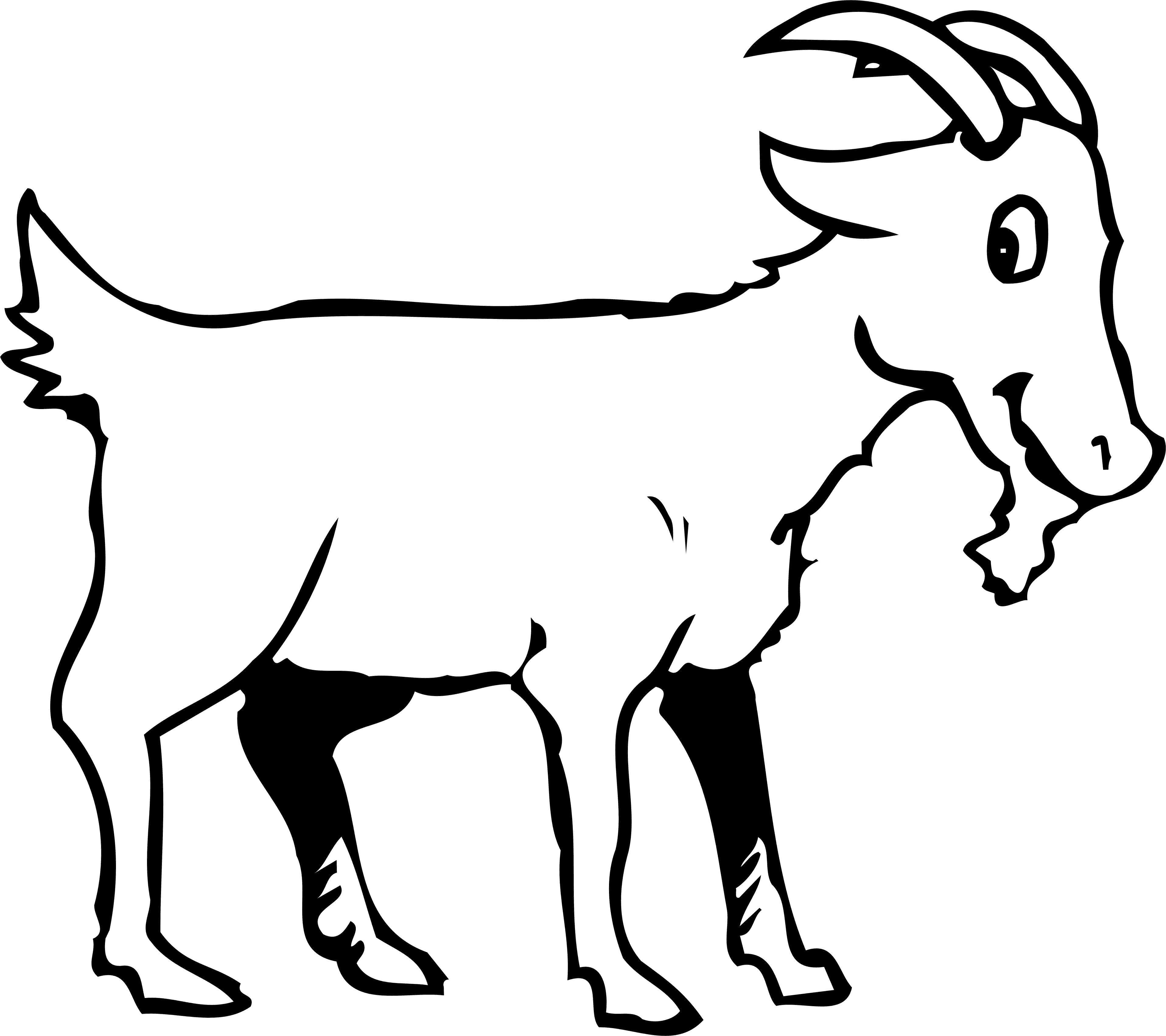 Раскраска  Козел с бородой и рогами. Скачать козел.  Распечатать козел