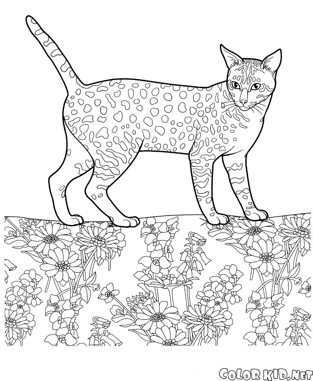 Раскраска Египетская мау. Скачать кошка.  Распечатать кошка