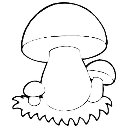 Раскраска  Грибы  для детей.. Скачать гриб.  Распечатать растения