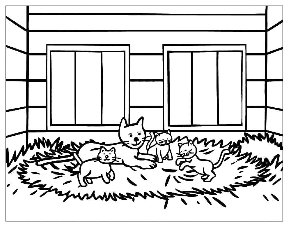 Раскраска Кошка и котята. Скачать кошка, Котенок.  Распечатать Домашние животные