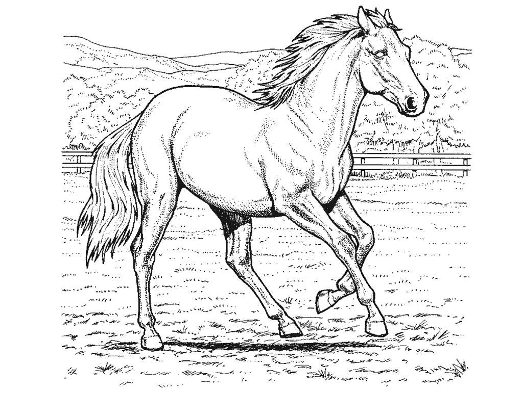 Раскраска Лошади . Скачать Лошадь.  Распечатать Домашние животные