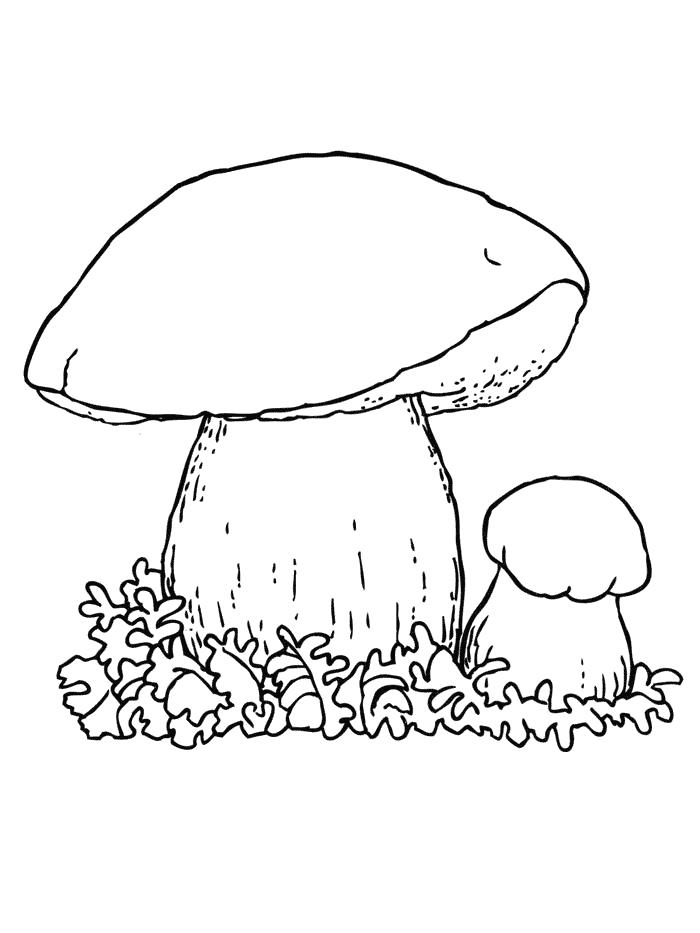 Раскраска Белый гриб   грибы. Скачать гриб.  Распечатать растения