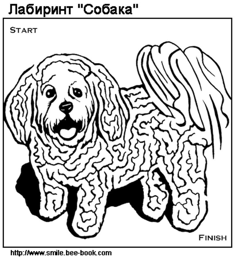 Раскраска Лабиринт развивающие игры, собака. Скачать лабиринт.  Распечатать лабиринт