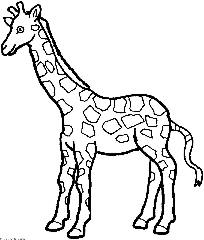 Раскраска  маленький жирафик. Скачать жираф.  Распечатать Дикие животные