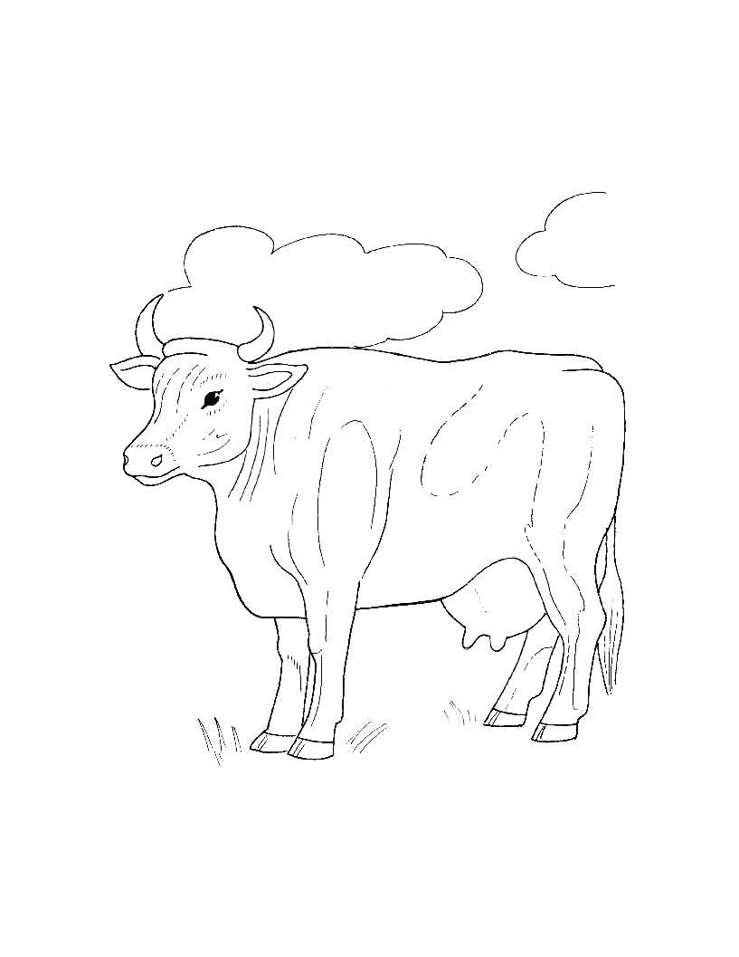 Раскраска  для самых маленьких  Домашние животные. Скачать Корова.  Распечатать Домашние животные