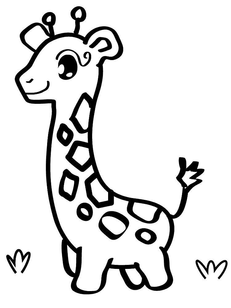 Раскраска Прогулка жирафа. Скачать .  Распечатать