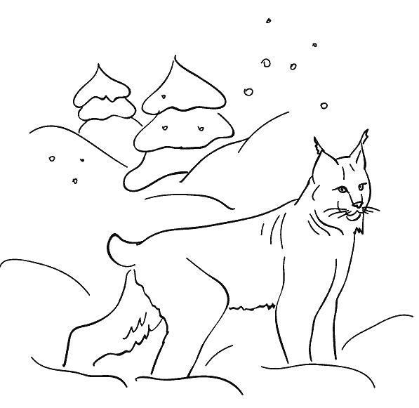 Раскраска  зимой  лесные животные для детей, рысь, снег, зима . Скачать снег.  Распечатать снег