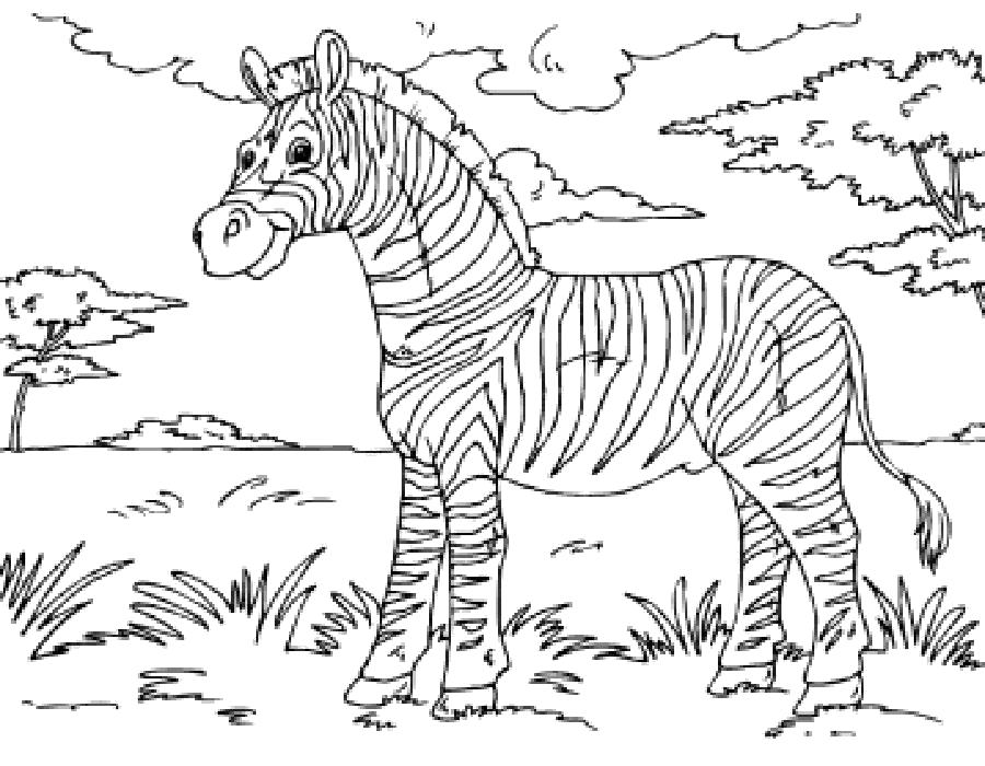 Раскраска  зебра. Скачать зебра.  Распечатать Дикие животные