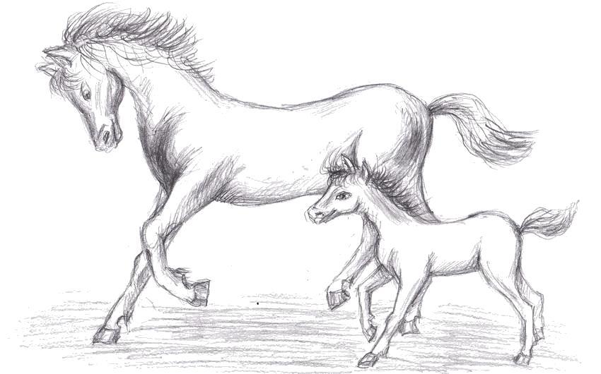 Раскраска Лошадь и жеребёнок. Скачать Лошадь.  Распечатать Домашние животные