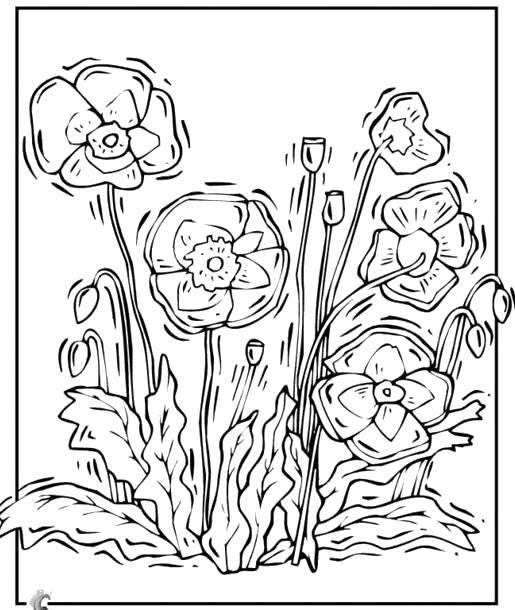 Раскраска рисунки цветов трафареты. Скачать Трафарет.  Распечатать Трафарет