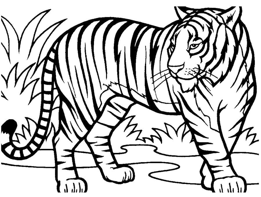 Раскраска Тигр большой -  полосатым тигров около высокой травы. Скачать Тигр.  Распечатать Дикие животные