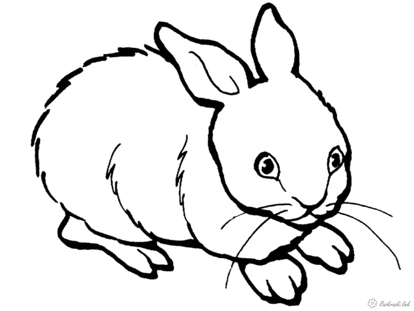 Раскраска Милашка. Скачать Заяц.  Распечатать Домашние животные