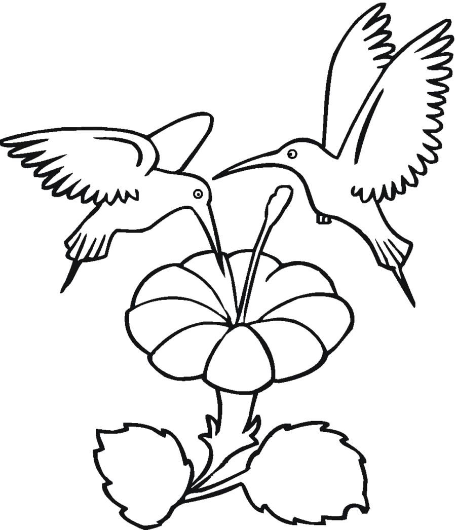Раскраска Два колибри и цветок. Скачать Цветок.  Распечатать Цветок