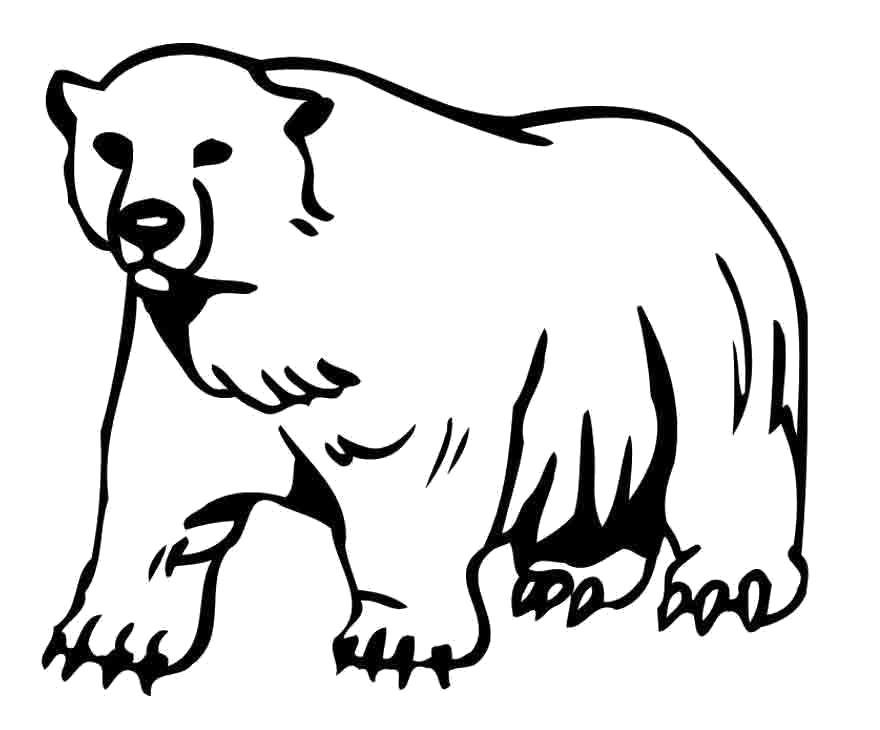Раскраска Белый медведь. . Скачать медведь.  Распечатать Дикие животные