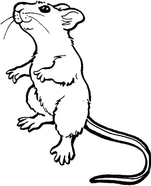 Раскраска  мышка стоит на двух лапках. Скачать мышь.  Распечатать Дикие животные