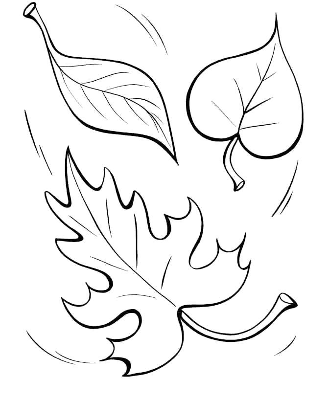 Раскраска осенние листья. Скачать лист.  Распечатать лист