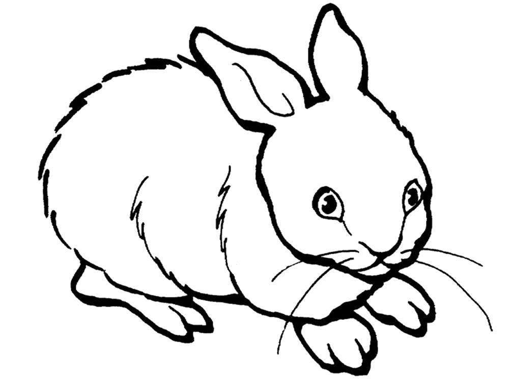 Раскраска  кролик, домашний кролик. Скачать Кролик.  Распечатать Кролик