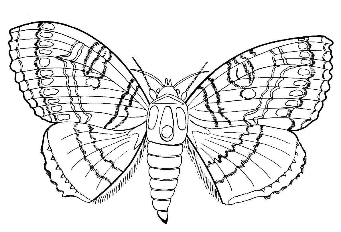Раскраска Бабочка с красивыми узорами. Скачать Бабочки.  Распечатать Бабочки