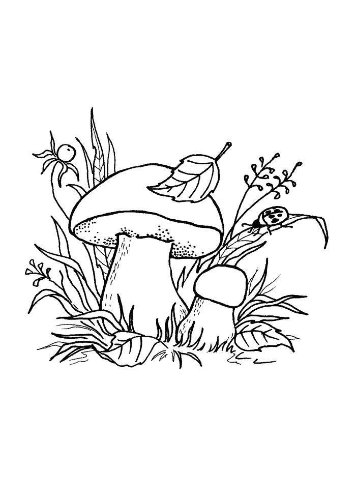 Раскраска Гриб боровик   грибы. Скачать гриб.  Распечатать растения