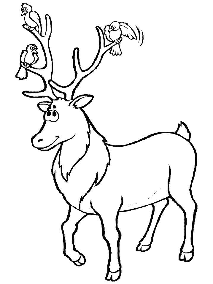 Раскраска  Птицы на рогах оленя. Скачать Олень.  Распечатать Олень