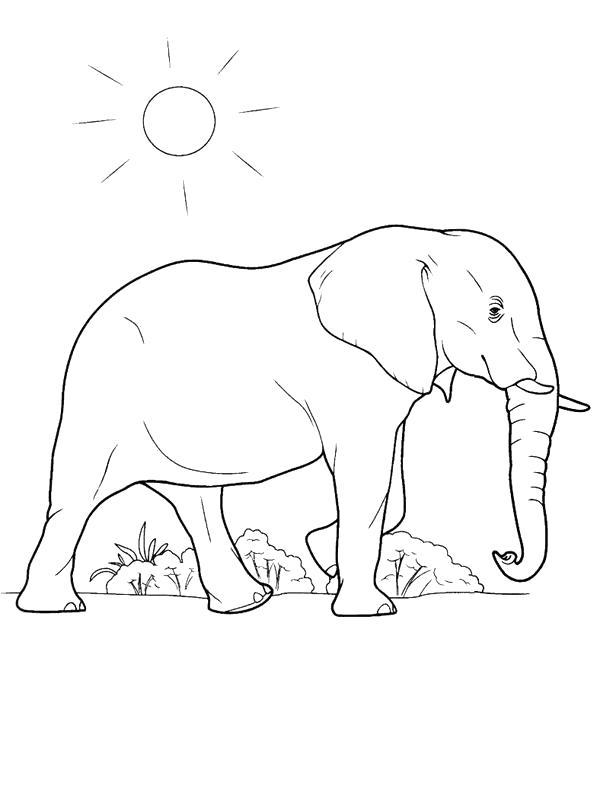 Раскраска слон гуляет под солнцем. Скачать слон.  Распечатать слон