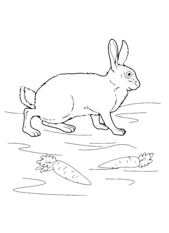 Раскраска заяц с морковками. Скачать Зайка.  Распечатать Зайка