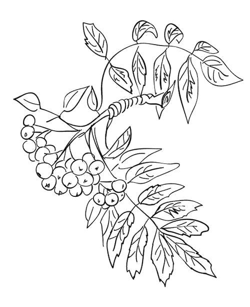 Раскраска  Облепиховая веточка. Скачать Листья рябины.  Распечатать Контуры листьев