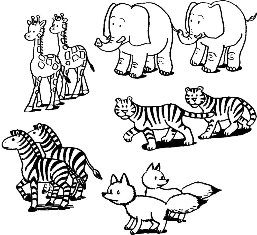 Раскраска Скачать или распечатать раскраску, слоны, жирафы, тигры, зебры, лисы . Скачать Тигр, слон, жираф, зебра, лиса.  Распечатать Дикие животные